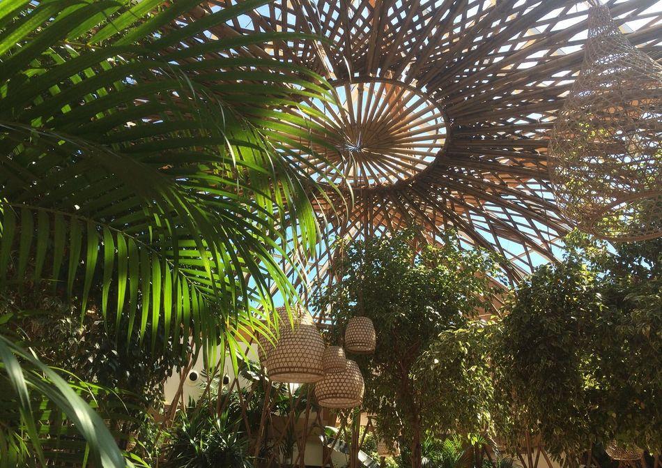 Die neue Bambuskuppel im Parkzentrum