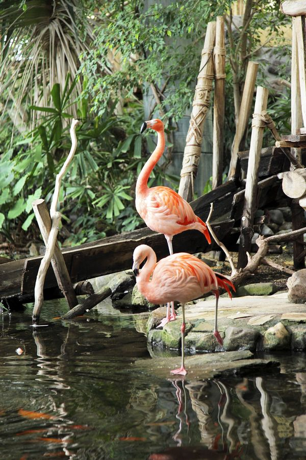 Les oiseaux et leurs secrets