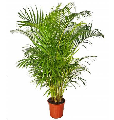 Des plantes tropicales pour votre int rieur for Plante interieur photo