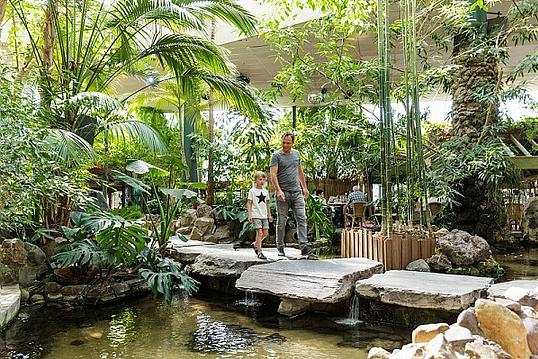 Des plantes tropicales pour votre intérieur !