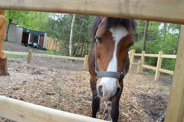 Ga op Pony Vakantie bij Center Parcs Erperheide!