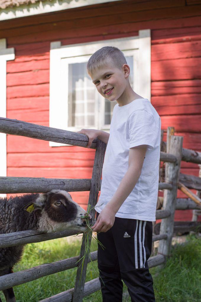 Emil Aikko katsomassa lampaita