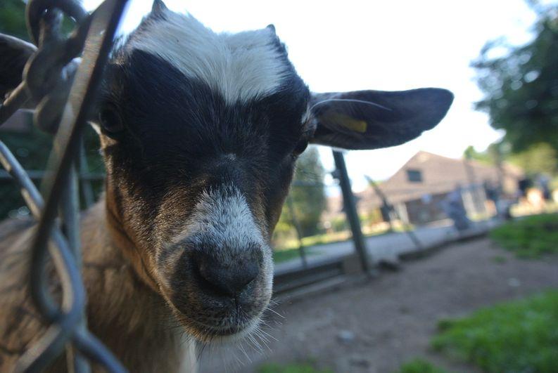 Tierpark Langenthal, Blog von Freudi, Fredi Greub