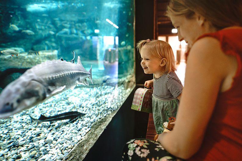 Aquarium Hotel Meilenstein
