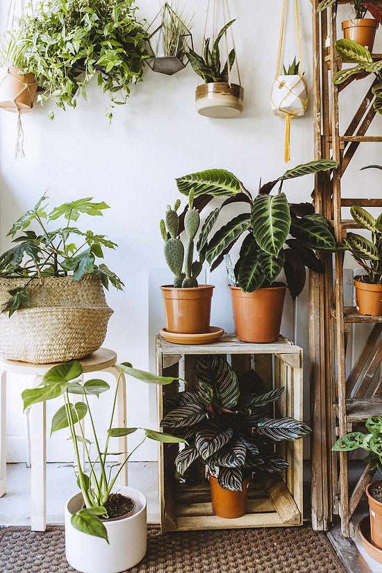 MoonKo will definitely give you plant envy. Photo by Shelley Richmond.