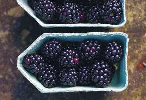 Blackberry and Gin Jam Recipe | Autumn Preserve Recipe