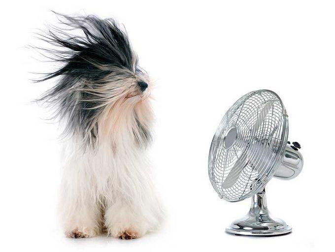Pöytätuulettimet laittavat ilman liikkeelle ja ilmavirta tuntuu virkistävältä, kun se osuu iholle - tai vaikkapa koiran karvoille.
