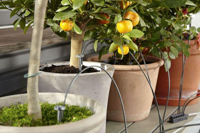 Parvekkeen kastelujärjestelmä pitää huolen kasveista ja kukista myös poissaollessasi.