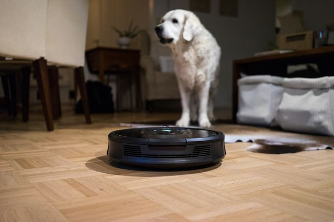 Iines-koiraa jännittää uusi tuttavuus, robotti-imuri.