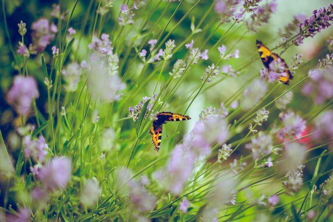 Perhoset viihtyvät niittyalueilla.