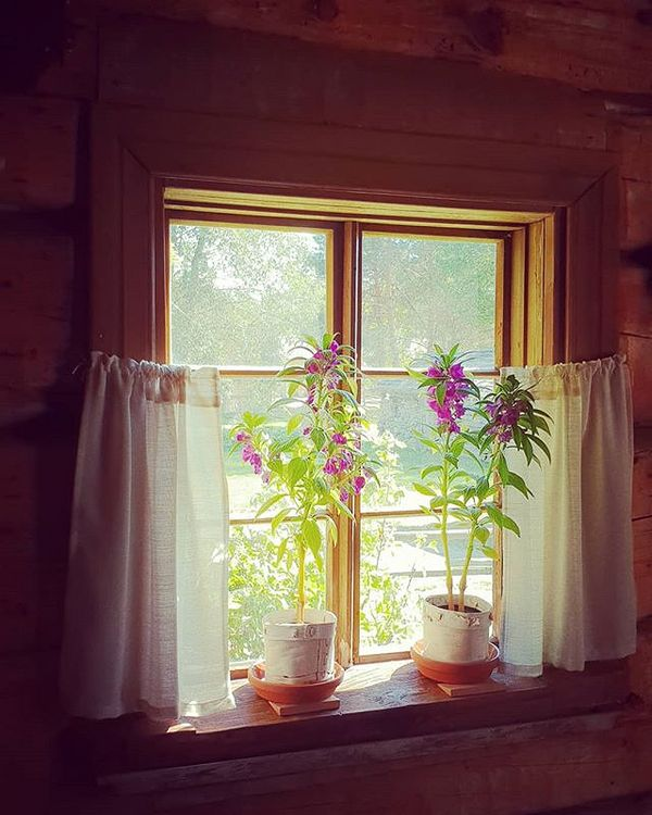 #windowsoftheworld #pielisenmuseo #Lieksa #ikkuna #window #museums #outdoormuseum #museokortti #elokuu #day13