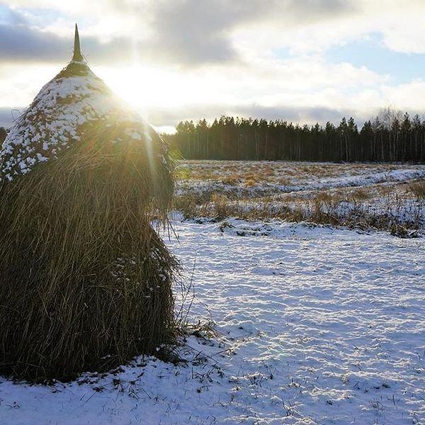 #frosty #winter #feeling #sun #snow #tikkala #tohmajärvi #suomi #finland #sonyalphasuomi #sonyA7 #sonyalpha