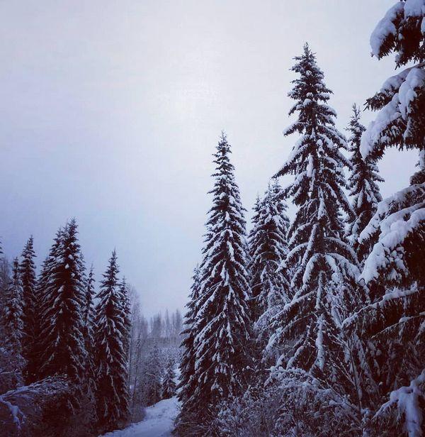 Sininen hetki 💙 #suomi #finland #heinävesi #talvi #winter #sininenhetki #bluemoment #winterlandscape #snow #landscape