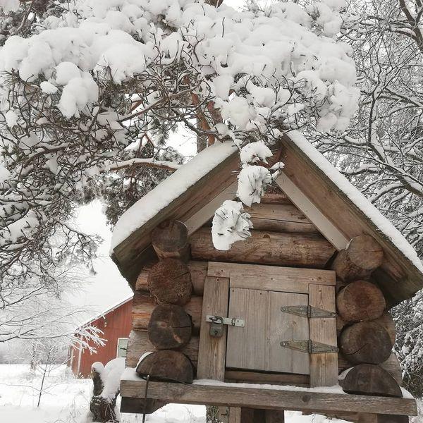 #snow #winter #tohmajärvi #holiday#weekend #talvi #luntapuissa