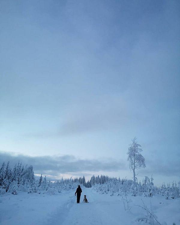 Mamman kans keppileikkiä. #rescuedog #winterwonderland #juuka