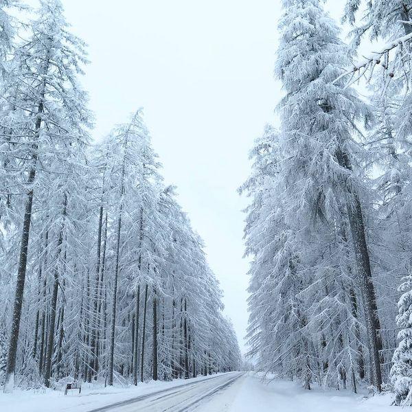 Läpi Puhoksen lehtikuusimetsän. #kitee #puhos #larix #lehtikuusi #talvi #lumi #finnishlandscape #finnishnature #rural_landscapes