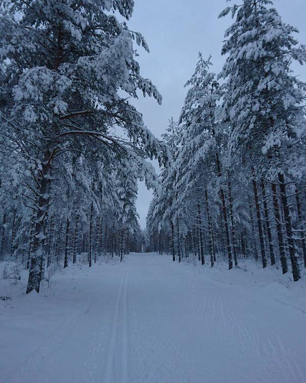 🎿 hiihtely #skitrack #intheforest #Finland #wintertime #december #Kontiolahti