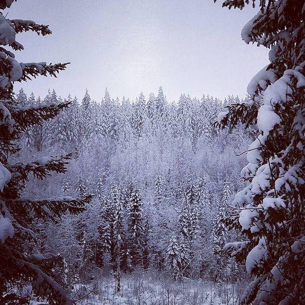 Outokumpu hoods #suomenluonto #nature #talvi #winter #outokumpu