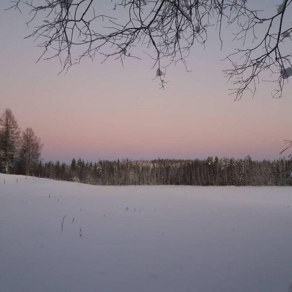 Piti äkkiä kipittää ulos umpihankeen kuvaamaan noita ihania värejä taivaanrannassa 😍  #kaunista #ihanatvärit #taivaanranta #tammikuu #talvi #pakkaspäivä #winter #winterwonderland #finland #northkarelia #tohmajärvi