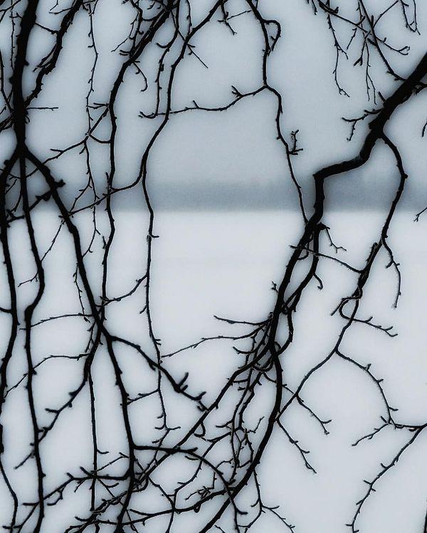 #artofvisuals #allbeauty_addiction #bestoffinland #branches #discovernature #ethereal_moods #forest #finnishnature #greatshotz #hyypii #hyypiinjärvi #kitee #moodygrams #moody_nature #mastershots #magicpict #northkarelia #naturephotographer #nature #naturephotography #nikon #pohjoiskarjala #planet_earth_shots #riyets #suomenluonto #top_world_photo #vibegrams #visualcollective #yleluonto