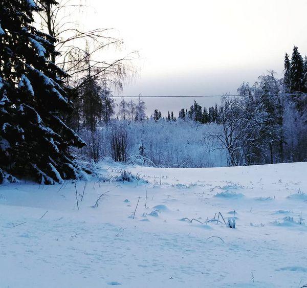 Kurkistus  A peek #maalaismaisema #maatila #pelto #Yläpihantila #talvimaisema #Sivakka #Valtimo #visitkarelia #maaseutu #perisivakka #countryside #farm #winter #landscape #ylapihafarm #sivakkavaara