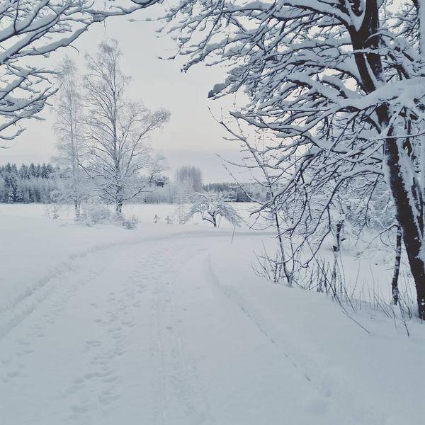 Pakkasen pirtsakkuus, luminen maisema ja pian upeasti nouseva kuutamo saavat mielen iloiseksi! #kohtiseuraavaaviikkoa #parasrääkkylä #rääkkylä #finland