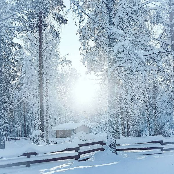 -32 this morning. Did a long walk with dog and felt good! #thebestoffinland #finland_photolovers #lieksa #pankakoski #winterwonderland #winterscenery #ig_finland #coldweather #snowylandscape #pakkaspäivä