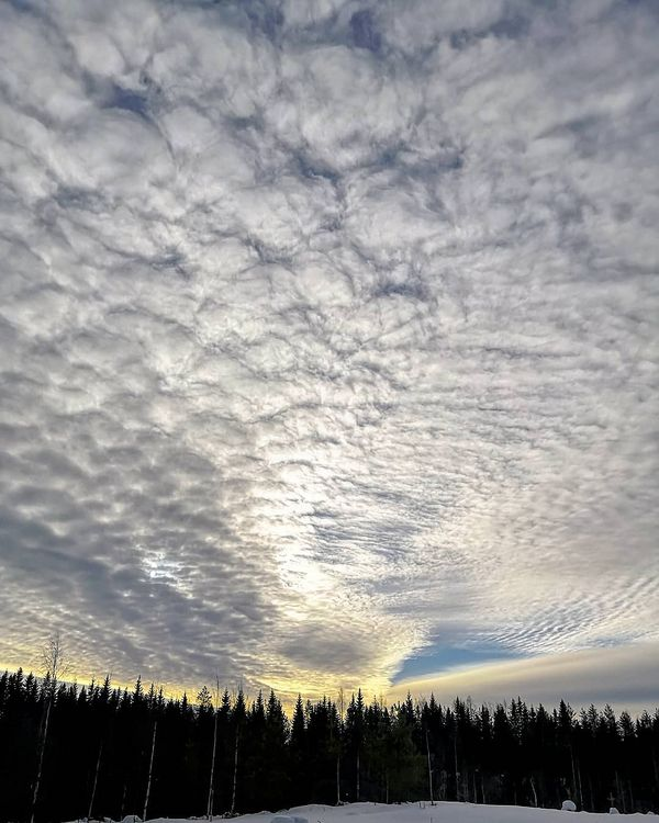 Aamutaivas Morning sky #finland #ilomantsi #sky_brilliance #sky_perfection #tv_clouds #visitingfinland #ig_finland #finland4seasons #mtvsaa #ylesaa #forecaweather #thisisfinland #beautyofsuomi #suomenluonto #nature_brilliance #nature_perfection #ig_nature_naturally #bns_sky #world_globalsky #global_creatives #awesome_finland #finland_photolovers