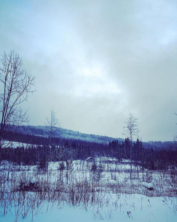 Into the wild🐻🏕💚 #pohjoiskarjala#itäsuomi#suomi#koli#kolinkansallispuisto#metsä#luonto#luontokuva#retkeily#eräily#vaellus#ulosluontoon