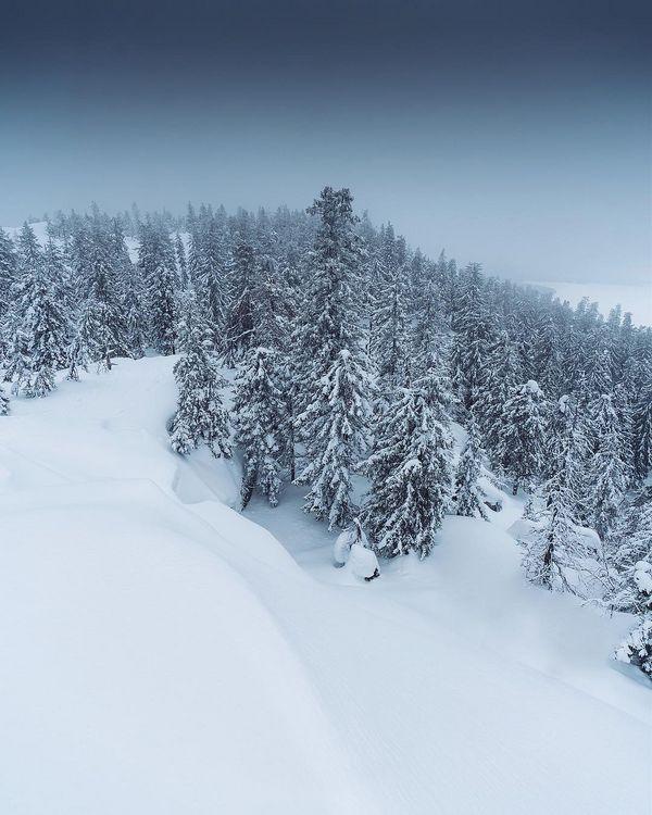 Туман в Koli National Park. Кому как, а для мне такая атмосфера гораздо ближе, чем яркий солнечный день без облаков. В тумане все каждое заснеженное дерево превращается в таинственное существо, что находится в зимней спячке и ждёт весеннего пробуждения. А вы ждёте весну?🌿 #joensuu #visitkarelia_finland #northkarelia