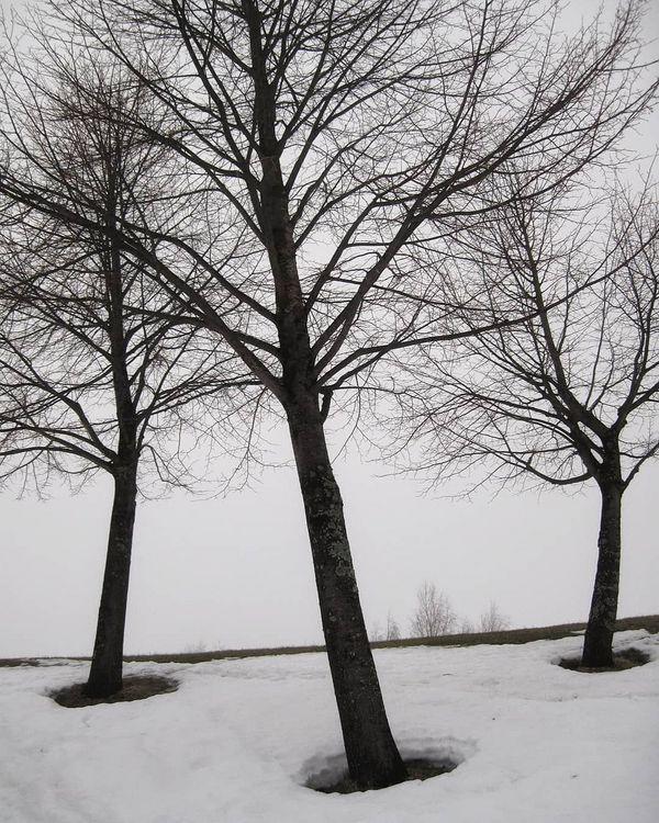 Awakening of trees... getting their space... 🕳️