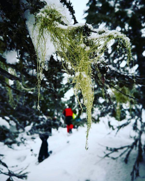 'Navaa' ein Zeichen für frische Luft! #wandern#schnee#frischeluft#urlaub#reisen#grün#travel#travelphotography#artoftheday#photooftheday#love#letsgo#qualitytime#lifetime#memories#now#feelgood#feelings#aniyakala#objektifimden#finlandiya#finland#finnland#nature#lakeland#yule#yulereisen#visitkarelia#visitkarelia_finland