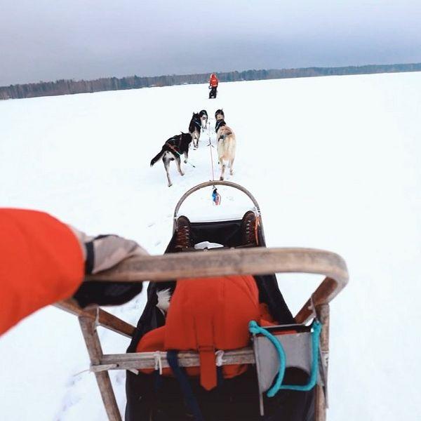 Тут за последние лет 5, наверное, уже сотня фото-постов про Финляндию набралась:) но ничто так не передаёт настоящность, как видео! Погружайтесь! ⠀ А если вы соберётесь в северную Карелию и захотите повторить наше приключение, то вот вам профили, которые в этом помогут: ⠀ visitkarelia_finland - официальный аккаунт туристического агенства, на их сайте очень много информации как по локациям, так и по событиям региона. adventurer_juha - делает туры на собачьих упряжках. karu_survival - покажет вам самые дикие и красивые места региона, а также научит выживанию в лесу. ⠀ Ну и тэгу #elivoskmovie🎞 ещё больше моих видео;)