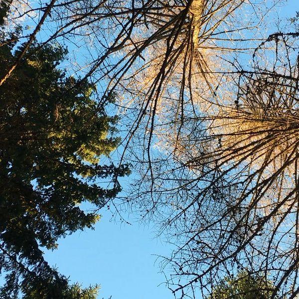 Birdsong #birdsong #outdoors #karjalanhelmi #cottage #travelfinland #mökkiloma #ourfinland #travelling #vacation #loma #finland #lovelyfinland #finnishnature #natureview #visitkarelia_finland #suoparsaari #luonto #naturelovers #ferien #reisen #urlaub #munympäristö #kitee #コテージ #フィンランド