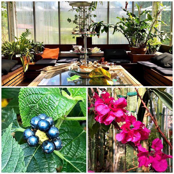 Botania🌵Joensuu🌵#botania #botaniajoensuu #botanicalgarden #visitjoensuu #visitkarelia_finland #pohjoiskarjala #northkarelia