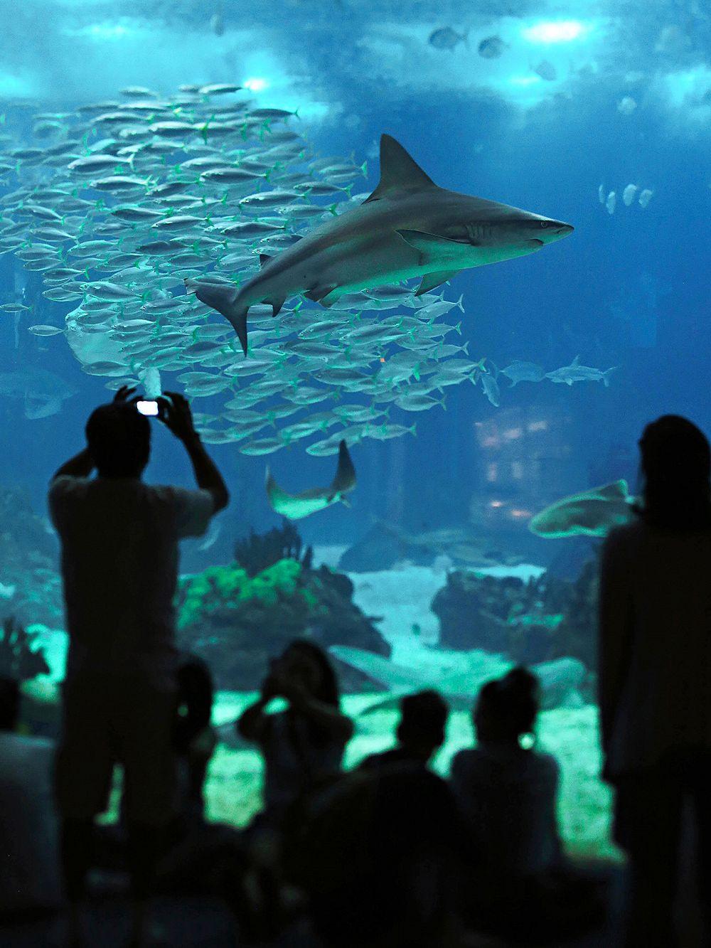 Oceanarium Lisbon