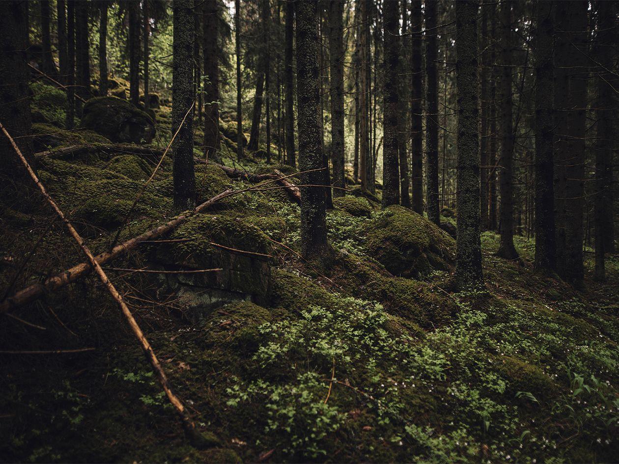 Finnish Design Shop Sustainability Strategy