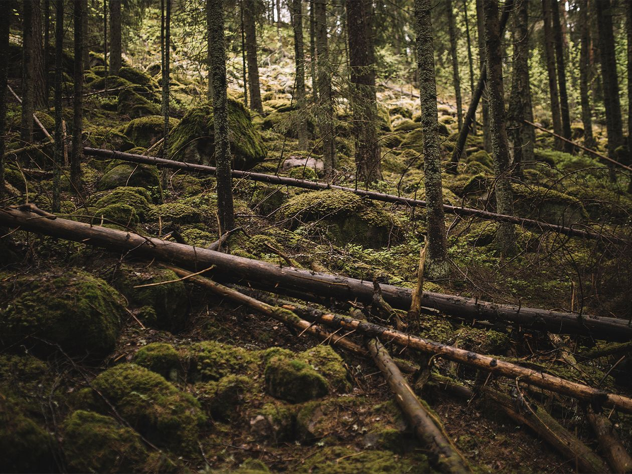 Finnish Design Shop forest protection