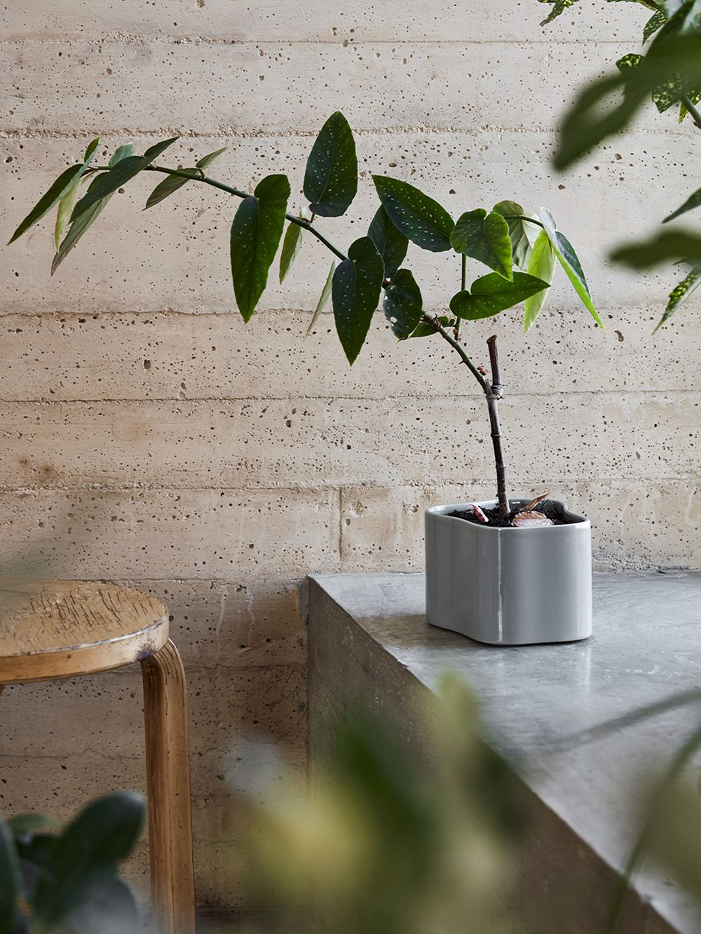 Artek Riihitie plant pot in grey