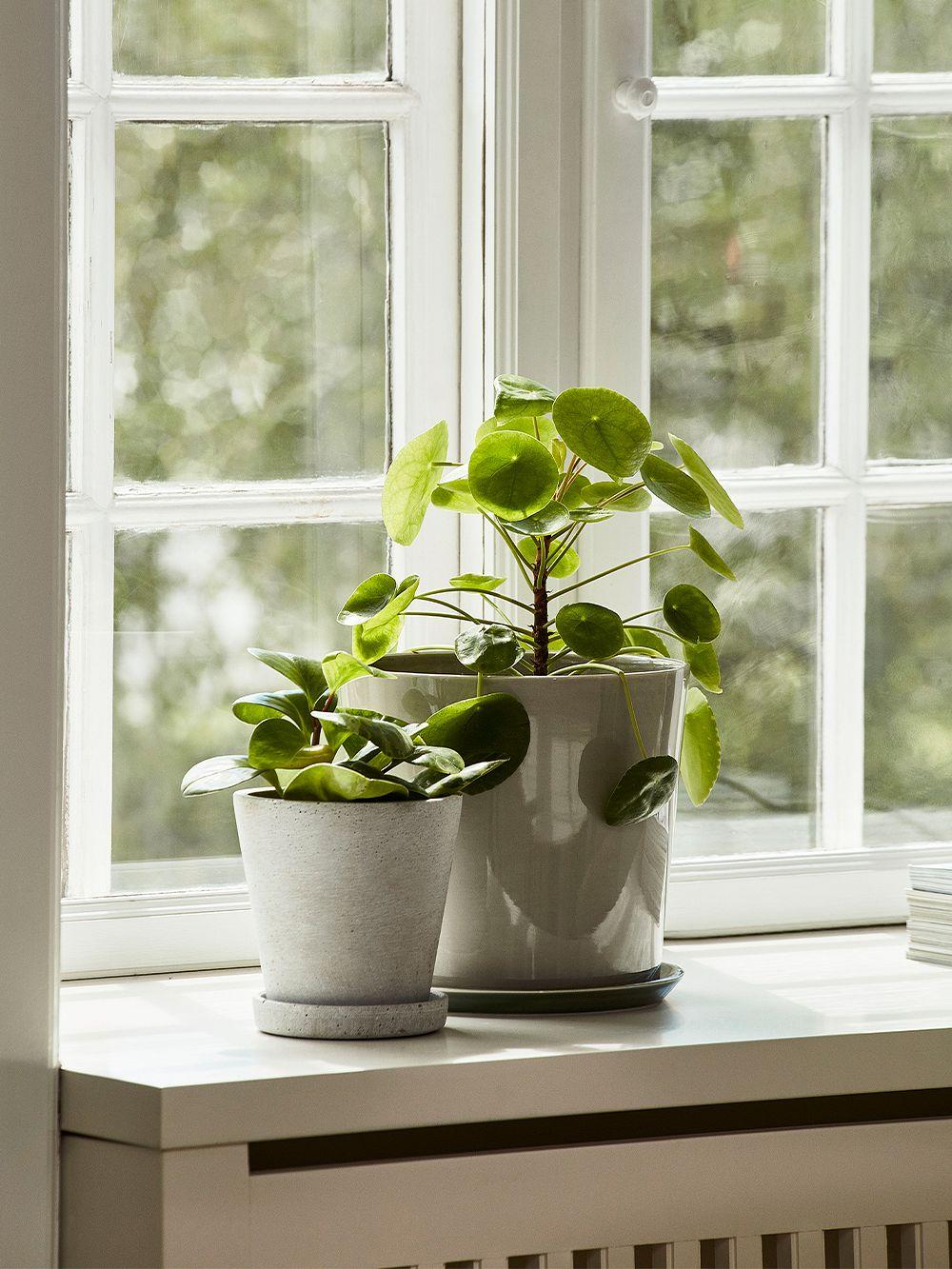 HAY Botanical Family pot and saucer, L, light grey