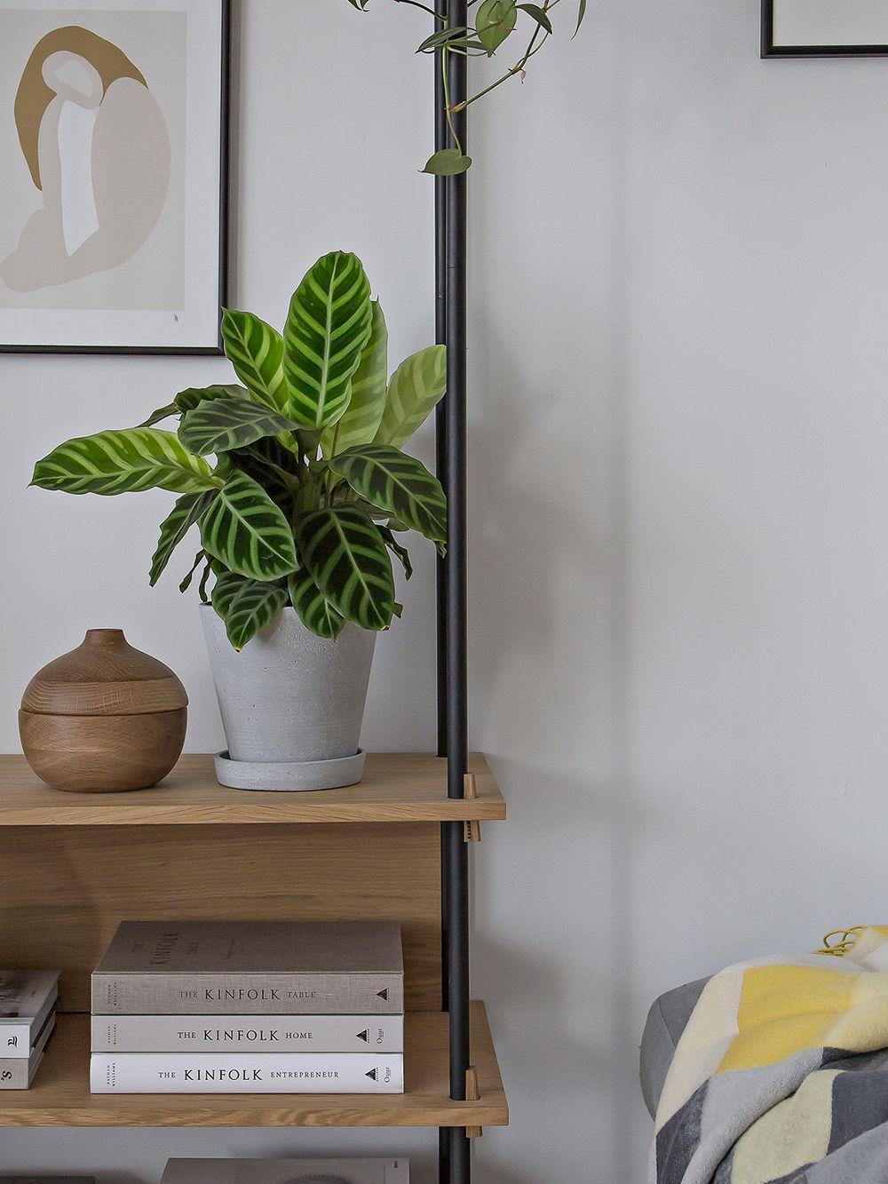 Hay's Flowerpot on a shelf in a living room.