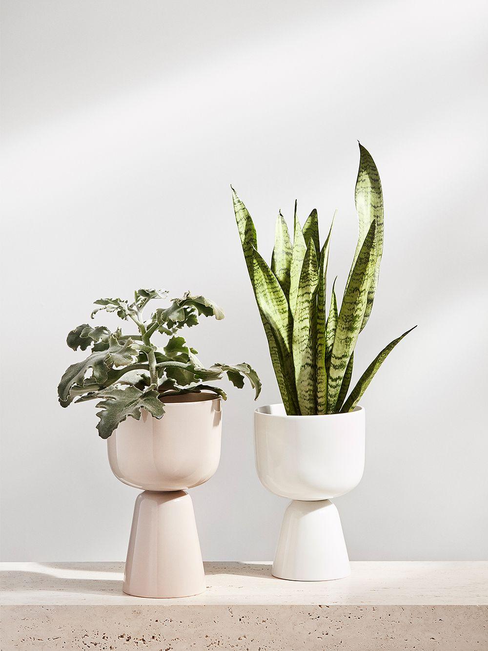 Iittala's Nappula pots in beige and white.