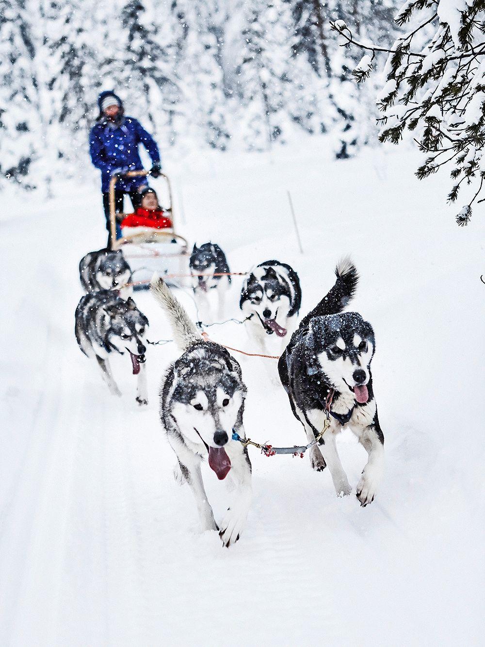 Dog sled in Ruka, Lapland