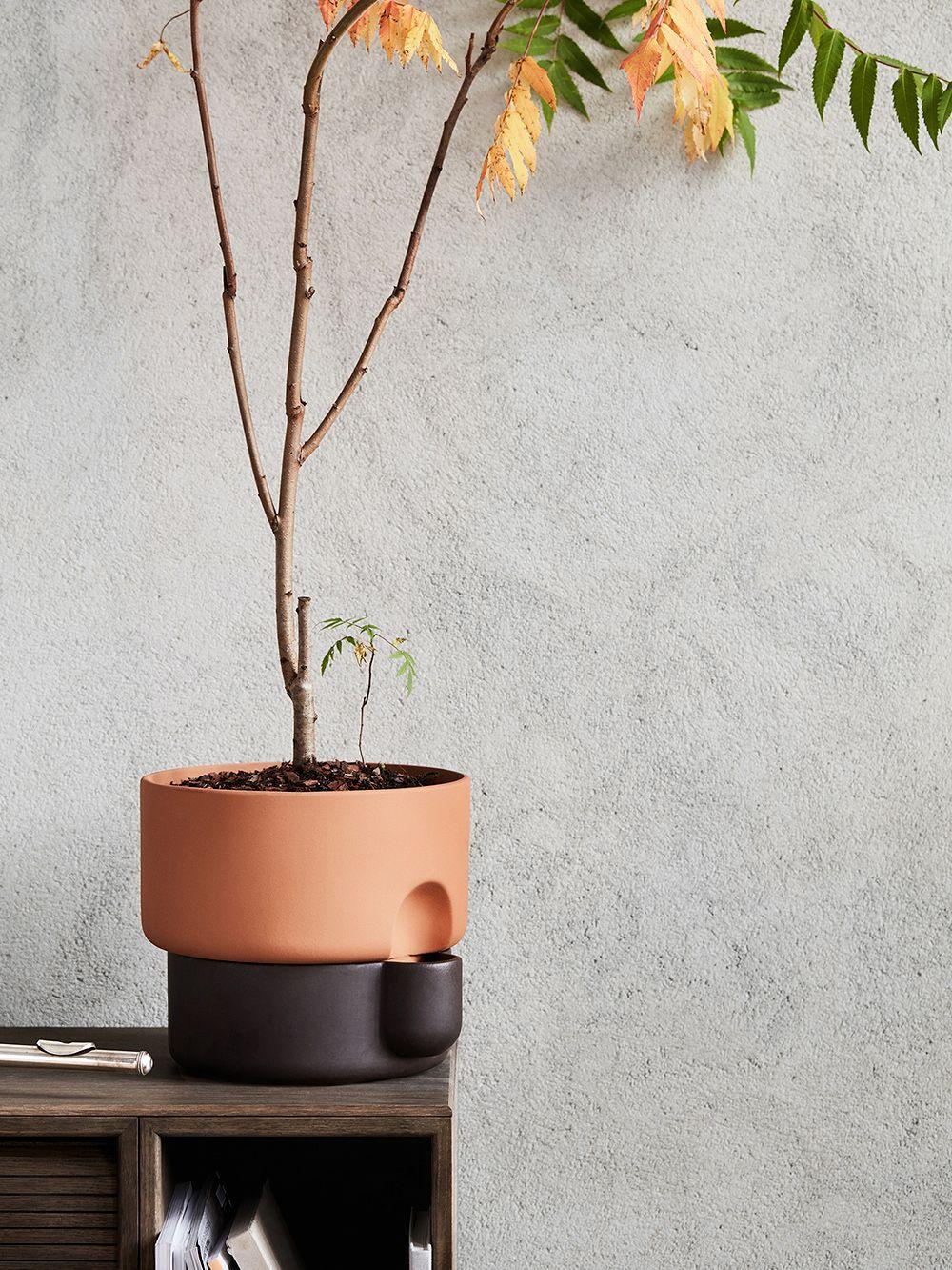Northern Oasis planter