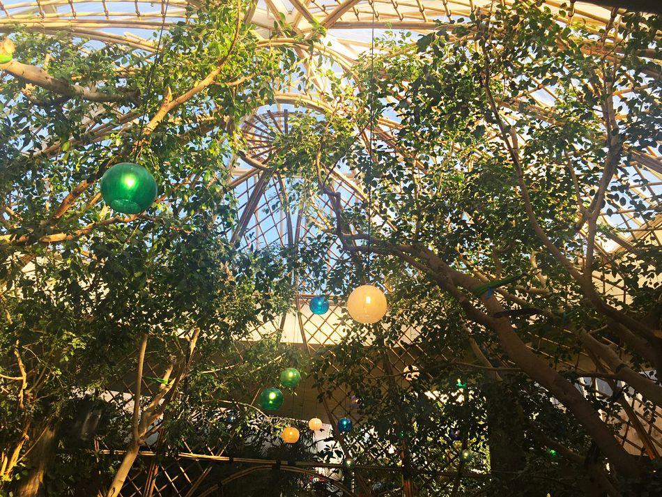 Die Bambuskuppel in Limburgse Peel wird in zwei Jahren der im Market Dome von Parc Sandur ähneln
