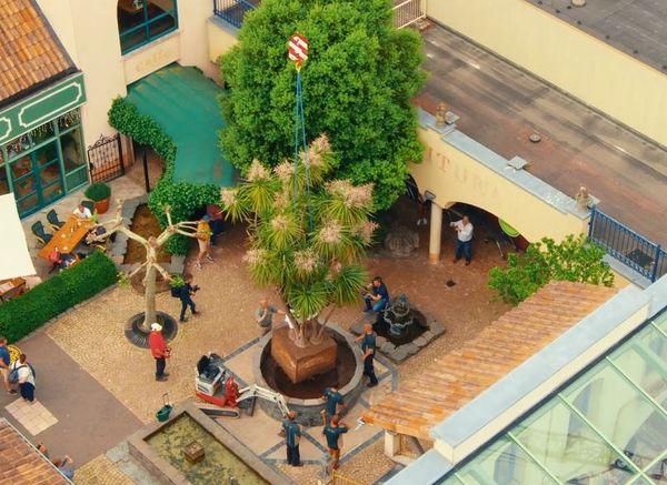 Tropische plant van 2.500 kilo verhuist naar De Eemhof