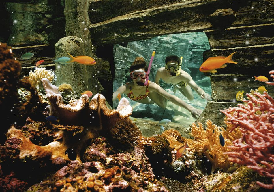 Snorkelen Leven in Zee-bad