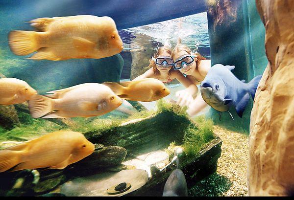 Vissen bekijken Leven in Zee-bad