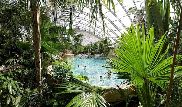 Reportage : Pourquoi les plantes tropicales de l'Aqua Mundo se portent-t-elles si bien ?