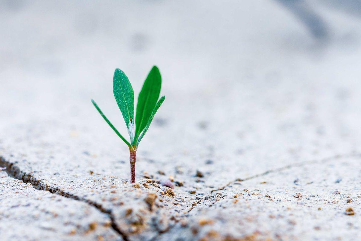 vihreä taimi kasvaa hiekan keskeltä